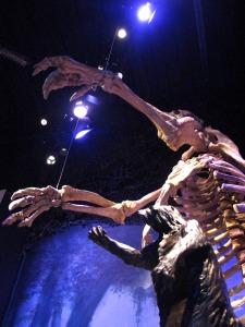 Giant Sloth at FLMNH Hall of Fossils